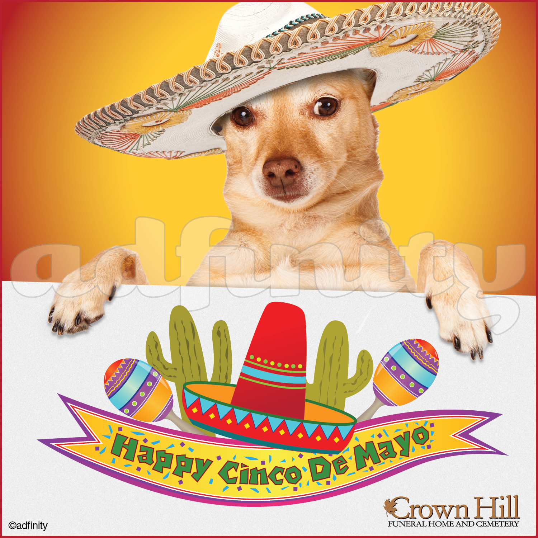 041514 Hy Cinco De Mayo Chihuahua Facebook Meme Jpg